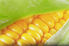 Buttered Corn on the Cob Stock Image