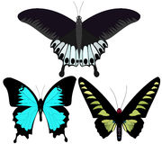Butterfies Royalty Free Stock Images