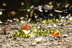 Butterfies Royalty Free Stock Photography