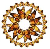 Butterfiles de monarque Image stock