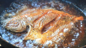 Butterfish frying in hot oil. Royalty Free Stock Photo