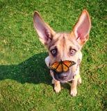 在与butterfl的夏天期间在草的一条逗人喜爱的狗在一个公园 免版税库存照片