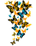 Butterfles. Butterflies on white background Stock Photo