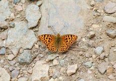 Butterfli es, passend zusammen Stockbild