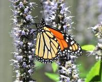 Butterfli es, passend zusammen lizenzfreie stockbilder