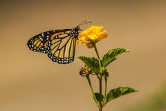 Butterfli es, passend zusammen Lizenzfreies Stockbild