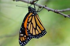 Butterfli es, passend zusammen Lizenzfreies Stockfoto