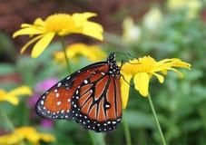 Butterfli es, passend zusammen Stockfoto