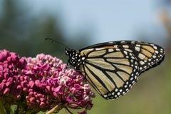 Butterfli es, passend zusammen Stockbilder