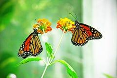 Butterfli es, passend zusammen lizenzfreie stockfotografie