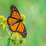 Butterfli S, het in paren rangschikken royalty-vrije stock afbeeldingen