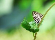 Butterflie 库存照片
