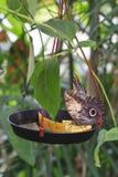 Butterflie Obraz Royalty Free