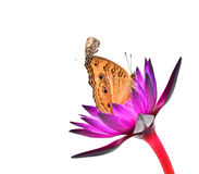 Butterflie Fotografia de Stock Royalty Free