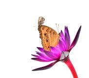 Butterflie 免版税图库摄影
