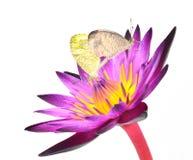Butterflie 免版税库存照片