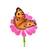 Butterflie Zdjęcie Royalty Free