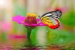Butterflie Royalty-vrije Stock Afbeeldingen
