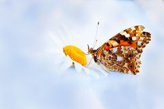 Butterflie on camomiles Royalty Free Stock Photography