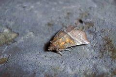 Butterflie di notte Fotografia Stock