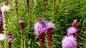 Butterflie en las flores en el prado
