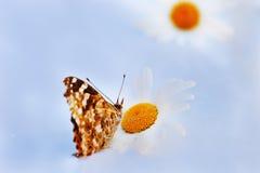 Butterflie su un prato Immagini Stock