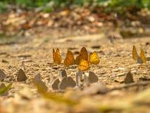 Butterflied Zdjęcia Royalty Free