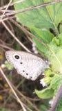 Butterfliege stockfoto