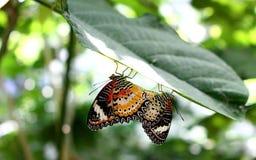 Butterfliege Lizenzfreie Stockbilder