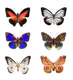 Butterflies. Several butterflies on a white background Royalty Free Stock Images