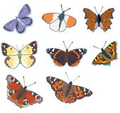 Butterflies. Illustration of various butterflies: (from left to right) Common Blue (Polyommatus icarus), Orange Tip (Anthocharis cardimine), Wall Butterfly ( stock illustration