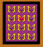 Butterflies. An image showing a gold background with a black framed sample box of illustrated butterflies with one butterfly shown in a different colour to the Stock Photo
