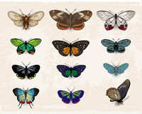 Butterflies. Isolated on light background Royalty Free Stock Images