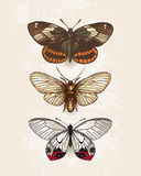 Butterflies. Isolated on light background Stock Photo