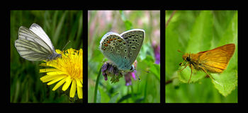 Butterflies. Butterfly triptych Royalty Free Stock Images
