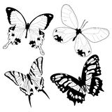 Butterflies. Sketches in black and white Stock Images