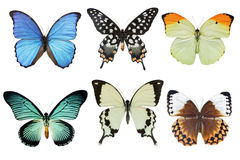 Free Butterflies Stock Photos - 16502603