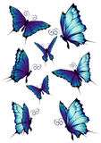 Butterflies. Illustration of blue butterflies set isolated on white background Stock Photos