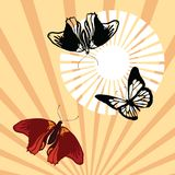 Butterflies Royalty Free Stock Images