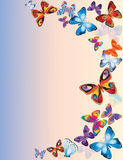 Butterflies. Royalty Free Stock Images
