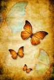 Butterflies. On a grunge paper background Stock Images