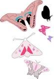 Butterflies. A illustration of different butterflies vector illustration