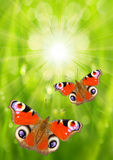The Butterflies. Stock Image