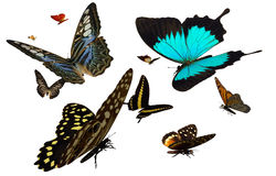 Butterflies. 3D render depicting a variety of colorful butterflies Royalty Free Stock Images
