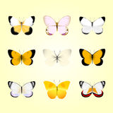 Butterflies Stock Photos