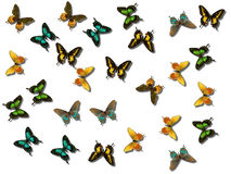 Butterflies. A collage of different butterflies Royalty Free Stock Photo