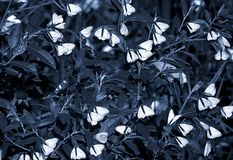 Butterflies. Sitting on the bush royalty free stock photography