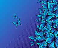 Butterflies. Stock Images