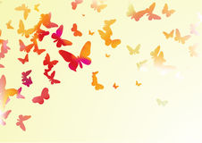 Free Butterflies Stock Photo - 6757230