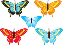 Butterflies. There are butterflies on white background Stock Image
